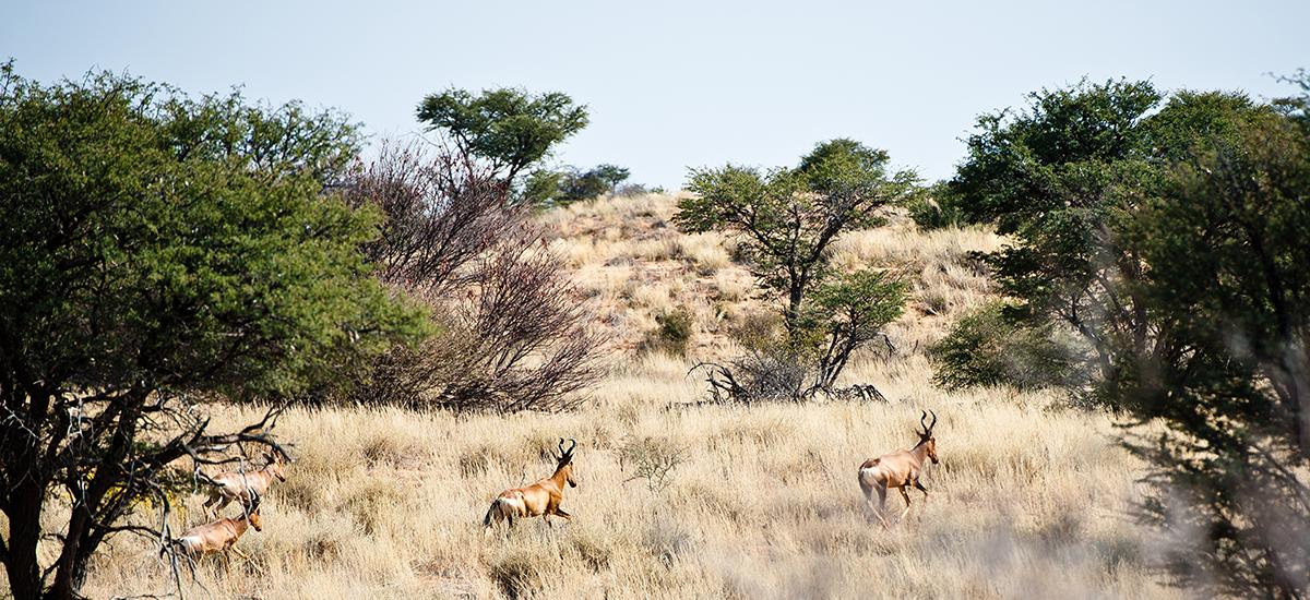 botswanas-kalahari-desert