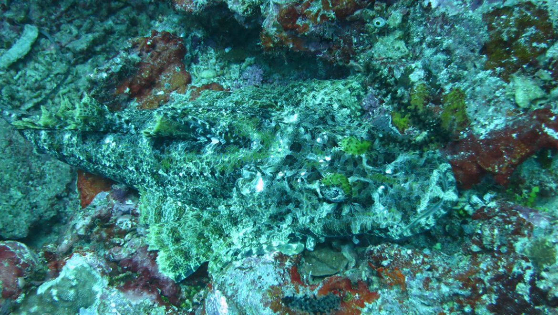הסוואה מושלמת בדגים וביצורים ימיים