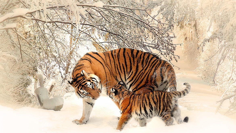 חיות בסכנת הכחדה