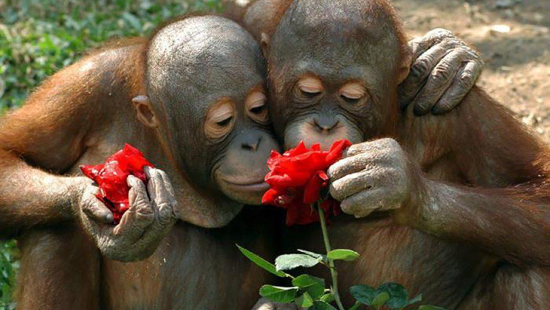 חיות ופרחים