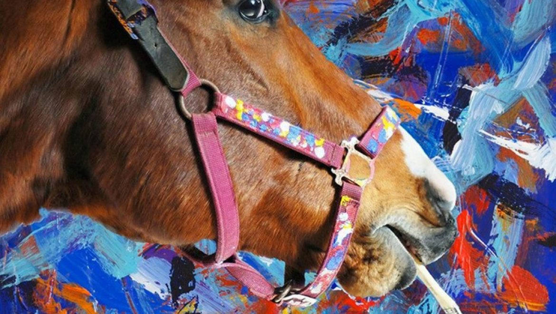 מטרו – הסוס שהפך לצייר